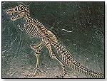 Dino Dig – Tyrannosaurus Skeleton by KRISTAL EDUCATIONAL INC.