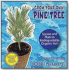 Grow Your Own Pine Tree by DUNECRAFT INC.