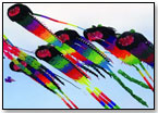 Picture Pretty Kites Still Pack the Power