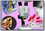 The Science of Xmas