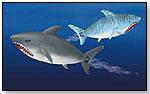 R/C Shark by HOBBICO
