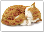Perfect Petzzz – Orange Tabby by CD3 INC.