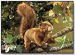Red Squirrel by FOLKMANIS INC.