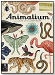 Animalium by Jenny Broom by CANDLEWICK PRESS