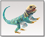Collared Lizard by FOLKMANIS INC.